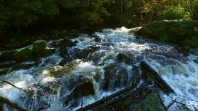 Floresta em sweden vídeos de arquivo
