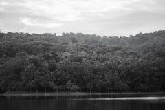 Floresta em Tailândia foto de stock