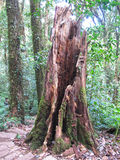 Floresta em Tailândia para viajar imagens de stock royalty free