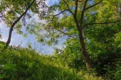 Floresta em um dia ensolarado Fotografia de Stock Royalty Free