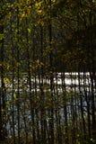 Floresta em um dia ensolarado de outubro imagem de stock royalty free