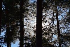 Floresta em um dia ensolarado de outubro foto de stock