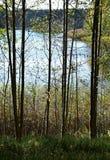 Floresta em um dia ensolarado de outubro fotografia de stock royalty free