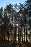 Floresta em um dia ensolarado de outubro fotos de stock royalty free