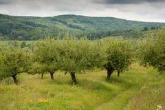 Floresta em um dia nebuloso Fotos de Stock Royalty Free