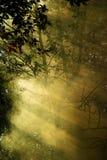 Floresta em um fumo Fotografia de Stock