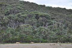Floresta em um monte imagem de stock