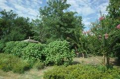 Floresta em um parque imagens de stock