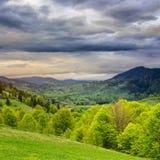 Floresta em uma inclinação de montanha Imagens de Stock