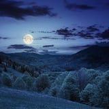 Floresta em uma inclinação de montanha na noite Fotos de Stock