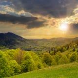 Floresta em uma inclinação de montanha no por do sol Imagem de Stock