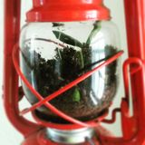 Floresta em uma lanterna Fotografia de Stock