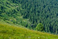 Floresta em Velka Fatra - Eslováquia Fotos de Stock Royalty Free