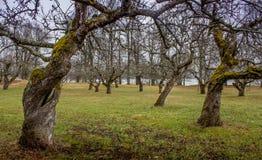 Floresta encantada Fotos de Stock Royalty Free