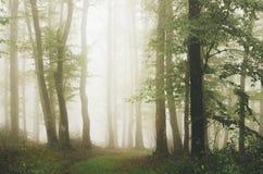 Floresta encantado com névoa através das árvores Imagens de Stock