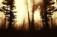 Floresta encantado com névoa e luz da manhã Fotografia de Stock
