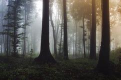 Floresta encantado com névoa no por do sol Foto de Stock Royalty Free