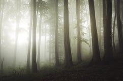 Floresta encantado da árvore de faia de Transylvanian com névoa Imagem de Stock