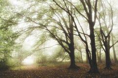 Floresta encantado do conto de fadas com névoa Foto de Stock Royalty Free