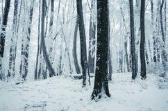 Floresta encantado do inverno com geada do hoar Foto de Stock