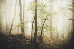 Floresta encantado do outono com névoa Fotografia de Stock Royalty Free