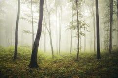 Floresta encantado do outono com névoa através das árvores Fotografia de Stock Royalty Free
