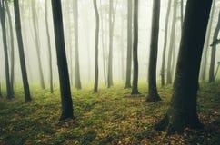 Floresta encantado do outono com névoa misteriosa Imagem de Stock