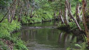 Floresta encantado e riacho filme