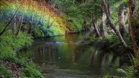 Floresta encantado e riacho vídeos de arquivo