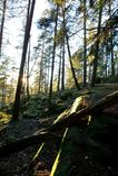 Floresta Enchanted fotos de stock royalty free