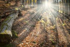 Floresta Enchanted fotografia de stock