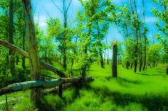 Floresta Enchanted foto de stock