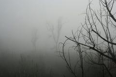 Floresta Enchanted Imagens de Stock