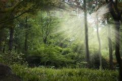 Floresta Enchanted fotos de stock