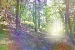 A floresta Enchanted fotografia de stock