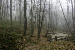 Floresta encoberta na névoa Fotografia de Stock Royalty Free
