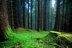 Floresta enevoada imagem de stock royalty free