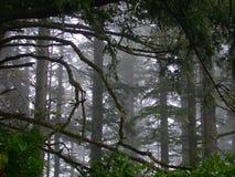 Floresta enevoada Fotos de Stock