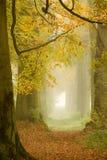 Floresta enevoada Imagens de Stock Royalty Free