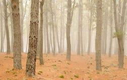 Floresta enevoada Imagens de Stock