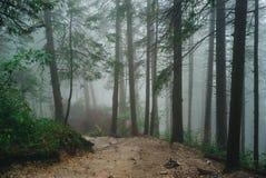 Floresta enevoada da montanha Fotografia de Stock Royalty Free