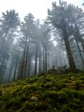 Floresta enevoada na névoa - Floresta Negra imagem de stock royalty free
