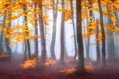 Floresta enevoada no outono imagens de stock royalty free