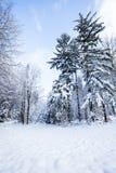 Floresta ensolarada do inverno Imagens de Stock