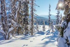 Floresta ensolarada do inverno - muita neve imagens de stock