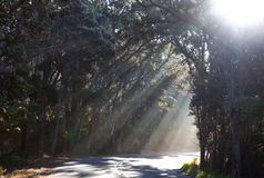 Floresta ensolarada em Havaí Imagem de Stock