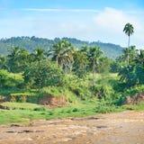 Floresta equatorial Fotografia de Stock Royalty Free