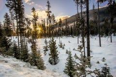 Floresta escassa no inverno com estrela de Sun fotografia de stock royalty free
