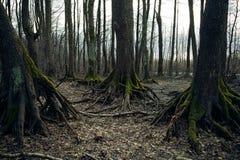Floresta escura Fotografia de Stock