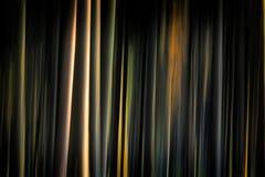 Floresta escura Foto de Stock